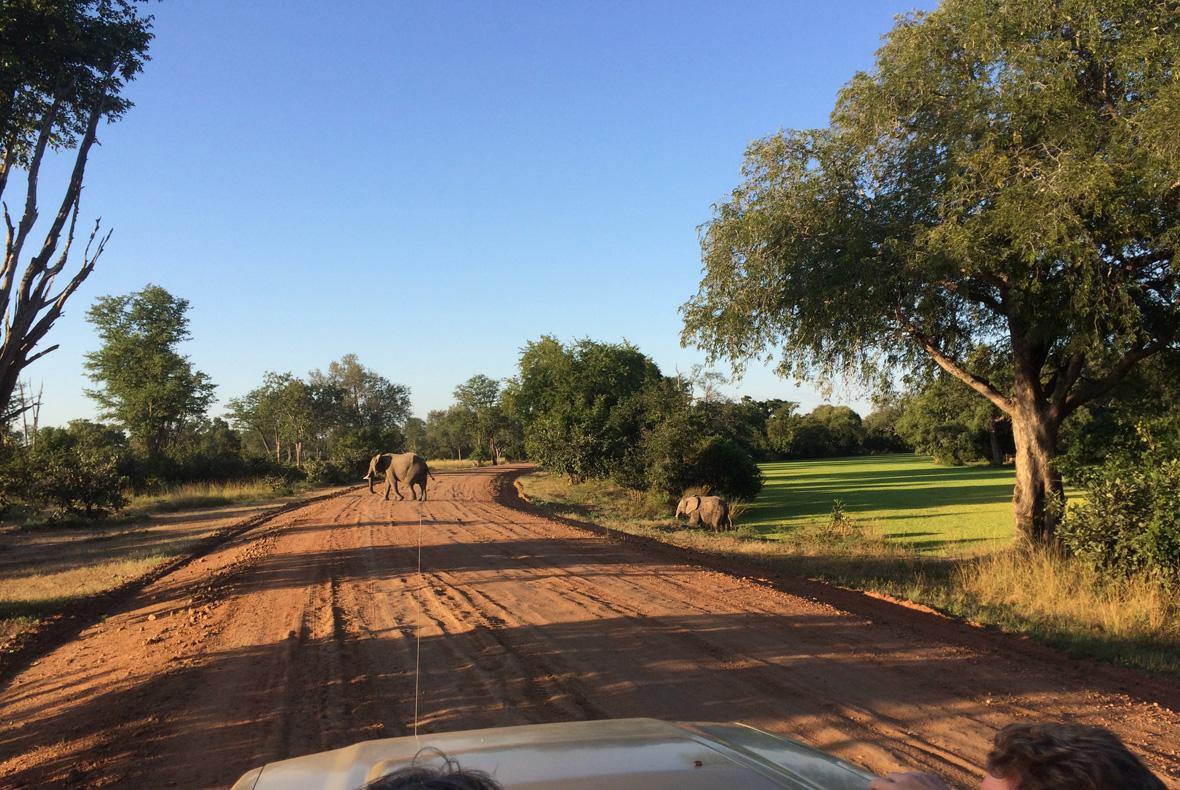 Zambia Safari Arc Consulting Partners